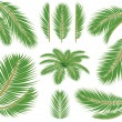 Palm verlaat. Vector Penseel — Stockvector