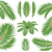 Palm leaves. Vector brush — Stock Vector