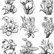 Set of sketches of flowers — Stock Vector