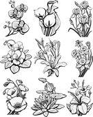 Ensemble de croquis de fleurs — Vecteur