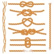 Set of ropes and knots — Stock Vector