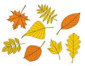 Фондовый векторные иллюстрации: Желтый осенний лист — Cтоковый вектор