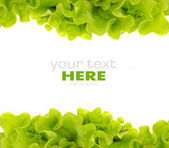 Fresh Green Salad frame — Stock Photo