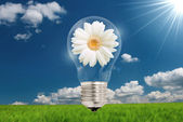 Lamp with flowers — Stock Photo