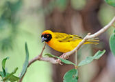 The African birds — Stock Photo