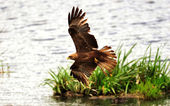 African birds — Stock Photo