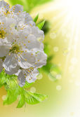 Jarní květiny — Stock fotografie