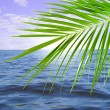 Palm and sea — Stock Photo