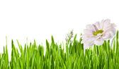 Grass green — Stock Photo