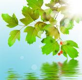 Rama verde — Foto de Stock