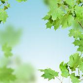 Branch green — Stock Photo