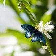 Butterfly on flower — Stock Photo #5540636