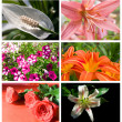 Collection flowers — Stock Photo #5541701