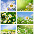 Collection daisywheel - Stock Photo