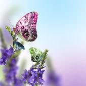 Springtime flowers — Stock Photo