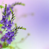 Herb flowers — Stock Photo