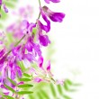 Flowers pink — Stock Photo