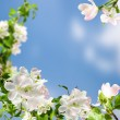 White flowers — Stock Photo #5715186