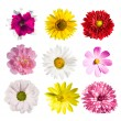 Collection flowers — Stock Photo #5798601