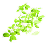 Ramo verde — Foto Stock