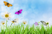 Flowers Daisywheels — Stock Photo