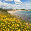 Stock Photo: Yellow spring flowers on beach