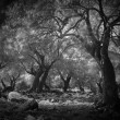 Mysterious dark forest - Stock Photo