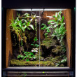 Rain forest terrarium — Stock Photo