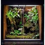 Rain forest terrarium — Stock Photo
