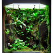 Terrarium for tropical rainforest pets - Stock Photo