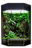 Terrarium for tropical rainforest pets — Stock Photo