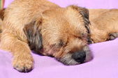 Dog tired — Stock Photo