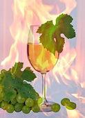 Rotwein stilleben — Stockfoto