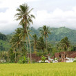 Ricefield houses and mountains — Stock Photo