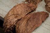 Tobacco leafs — Stock Photo