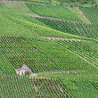 Vineyards at the mosel — Stock Photo