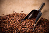 Steel scoop in coffee beans — Stock Photo