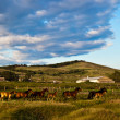 Herd galloping at the field - Stock Photo