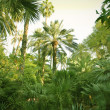Palm trees — Stock Photo #5753355