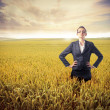 Stock Photo: Agriculture and business