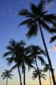 Sunset Palms — Stock Photo