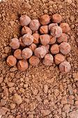 Chocolate truffles in cocoa — Stock Photo