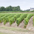 Stock Photo: Vineyard, Sauternes Region, France