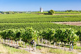 Vineyard with windmill near Blaignan, Bordeaux Region, France — Stock Photo