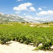 Vineyards, La Rioja, Spain — Stock Photo