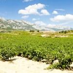 Vineyards, La Rioja, Spain — Stock Photo #5918419