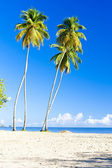 Maracas Bay, Trinidad — Stock Photo