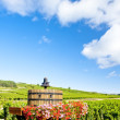 Vineyards of Cote de Beaune near Pommard, Burgundy, France — Stock Photo #5980414