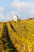 Vineyard in autumn near Hnanice, Czech Republic — Stock Photo