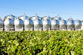 Fermentation tanks, Begadan, Bordeaux Region, France — Stock Photo
